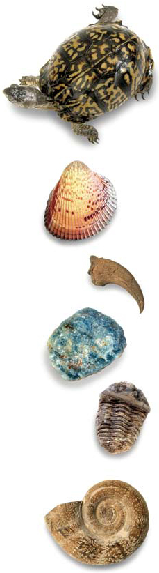 Photograph showing items such as a shell, turle, claw, minerals, and a fossil that might be found in a science class.