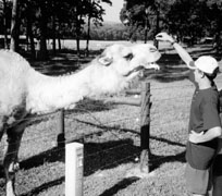 Picture of a student with camel