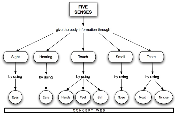 A Concept Web displays the relationship between the Five Senses and the way the body gathers information through the five senses. Sight information is received through the eyes. Hearing information is received through the ears. Touch information is received through the Hands, Feet, and Skin. Smell information is received through the nose, and Taste information is received through the mouth and tongue.